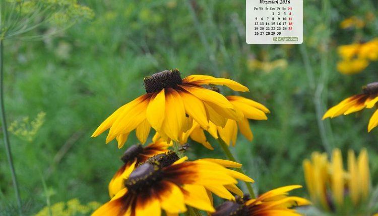 Kalendarz na pulpit – WRZESIEŃ 2016