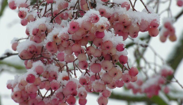 Kalendarz ogrodnika – LISTOPAD