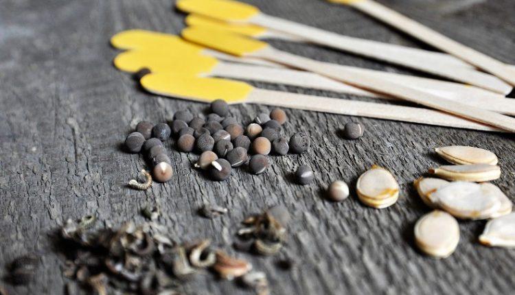 Zapraszamy na naszą coroczną wymianę nasion