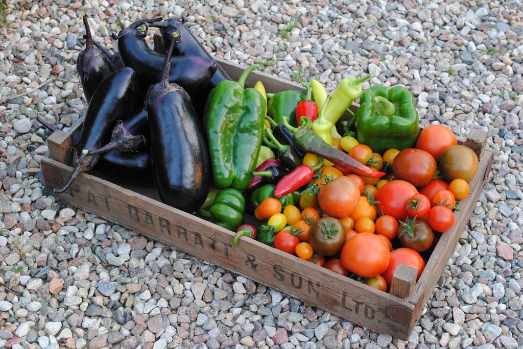 Regulamin konkursu: Pyszne i zdrowe pomidory