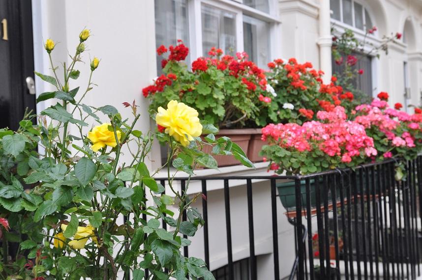 Mój ogród: Miejski ogrodnik – decyzja zapadła