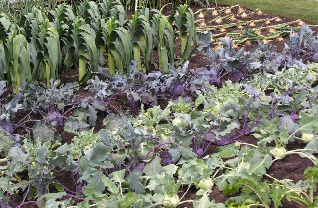 Uprawa warzyw z własnej rozsady