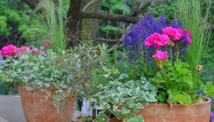 Kwiatowe kompozycje na słoneczny balkon – lato
