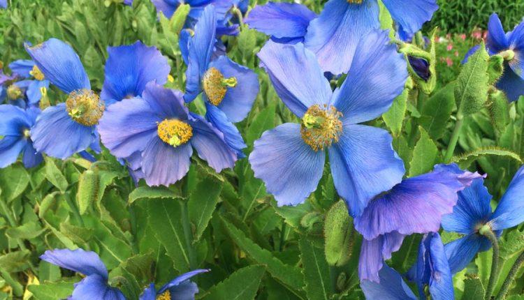 Ogrody botaniczne i ogródki na Islandii