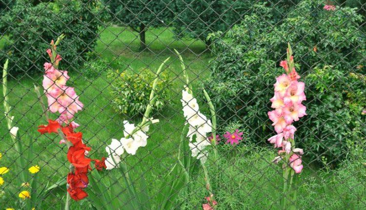 Siatka ogrodzeniowa – zgrzewana czy pleciona?