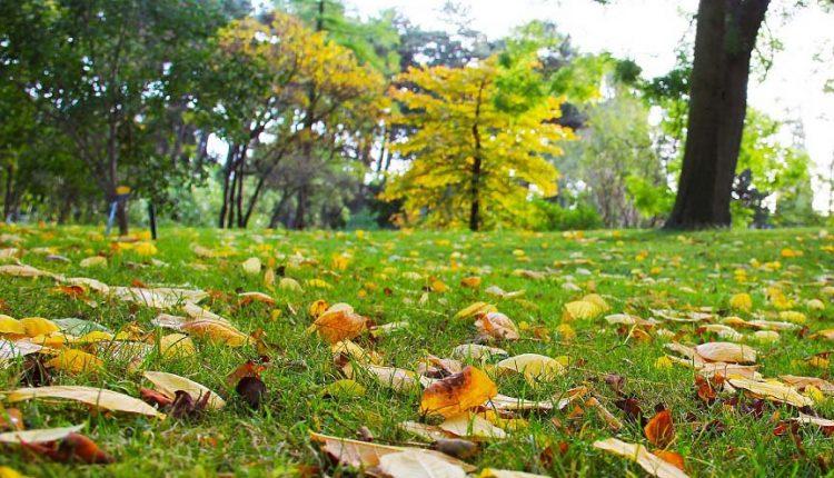Jak przygotować ogród do zimy? 5 cennych wskazówek