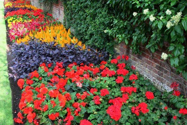 Czerwień (nie tylko) w ogrodzie