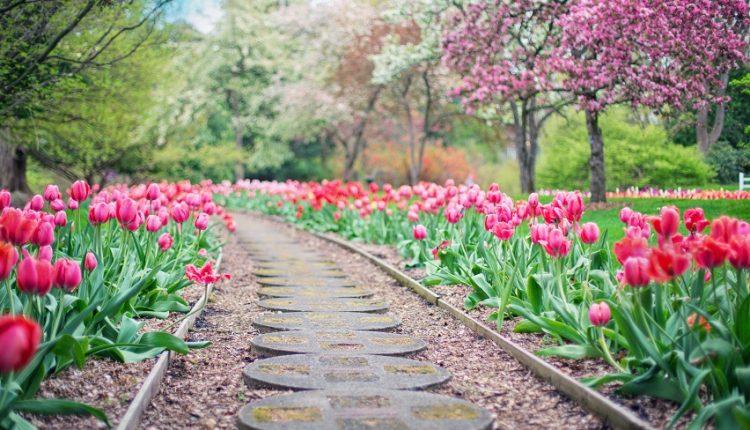 Piękny ogród może być Twój!