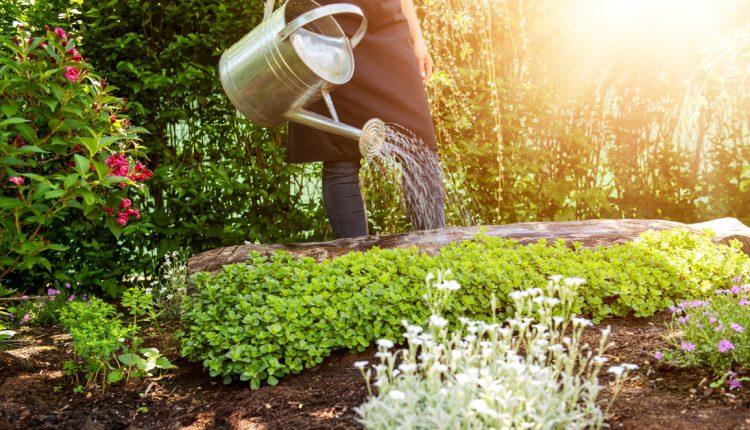 Pielęgnacja ogrodu – najlepsze produkty, które musisz mieć
