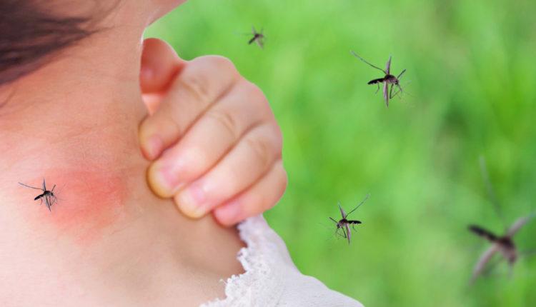 Jakie środki odstraszające na owady warto zastosować, by zminimalizować ryzyko ukąszenia?