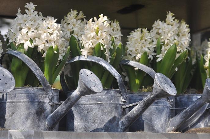 Wiosenne Kompozycje Kwiatowe Naogrodowejpl