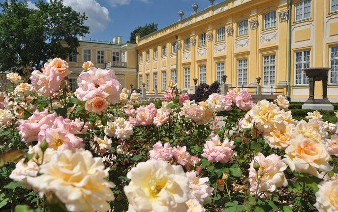 W Wilanowie pachną róże