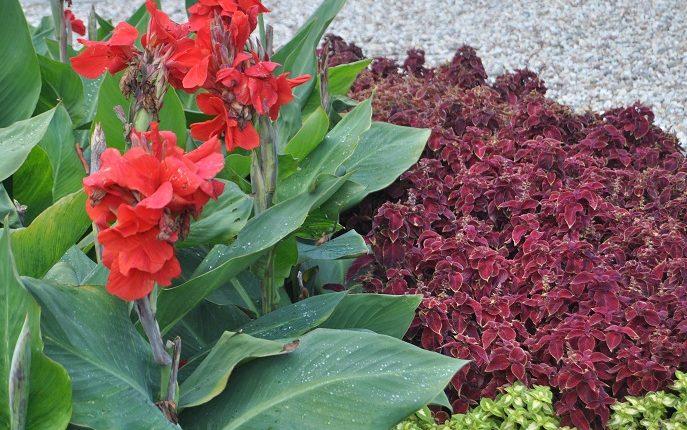 Jesienne rabaty kwiatowe