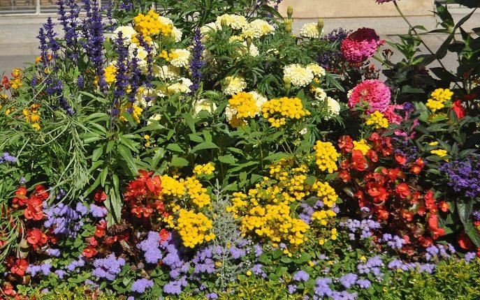 Rabaty kwiatowe – gotowe pomysły