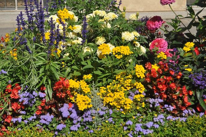 Gotowy Projekt Rabaty Kwiatowej Rosliny Jednoroczne Naogrodowej Pl