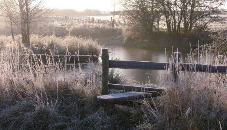 Jak zrobić ładne zdjęcia w ogrodzie zimą?