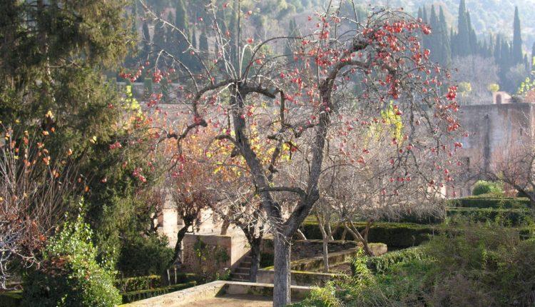 Wczesna wiosna w Alhambrze
