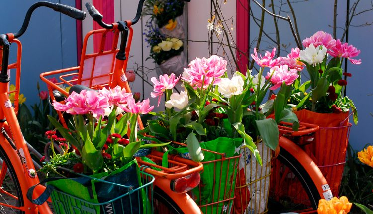 Pomysły na wiosenne rośliny cebulowe w pojemnikach