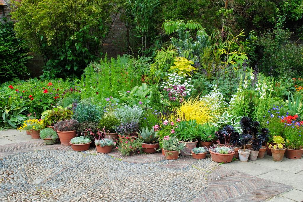 Ogródek Bylinowy W Donicy Dla Początkujących Naogrodowejpl
