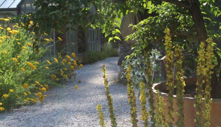 Ogród Botaniczny Uniwersytetu w Bernie