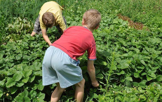 Ogród, który leczy – czyli co to jest hortiterapia