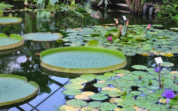 Ogród Botaniczny w Dreźnie