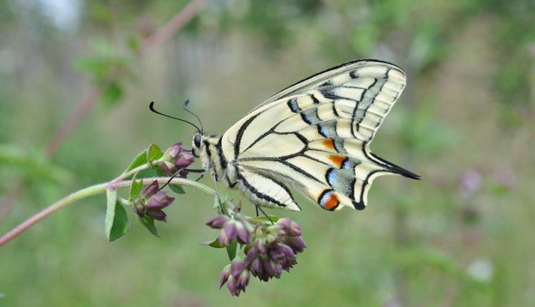 Zapraszamy motyle do ogrodu