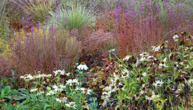 Ogród bylinowy Pieta Oudolfa w Skarholmen