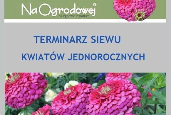 Terminarz siewu kwiatów jednorocznych