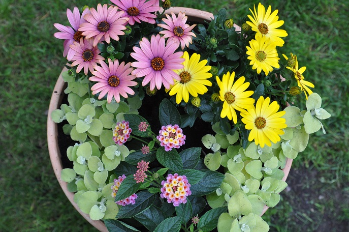 Kwiatowe Donice Na Słoneczny Balkon Naogrodowejpl