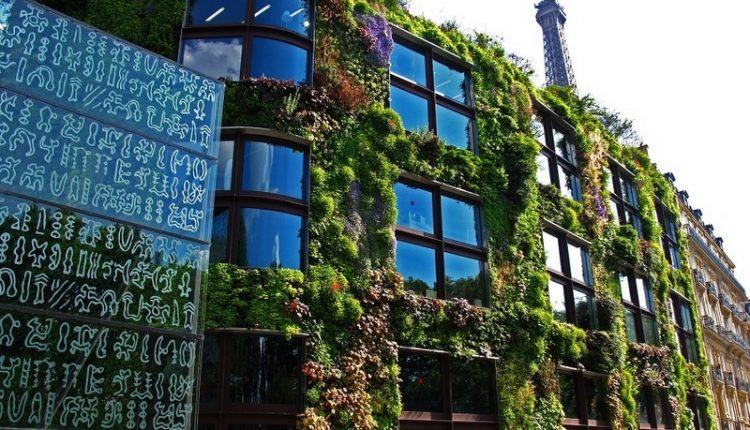 Patrick Blanc – twórca ogrodów wertykalnych