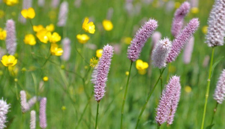 Łąka kwietna dekoracyjna latem