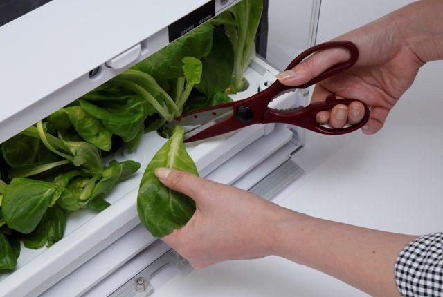 Uprawiamy własne warzywa w środku zimy