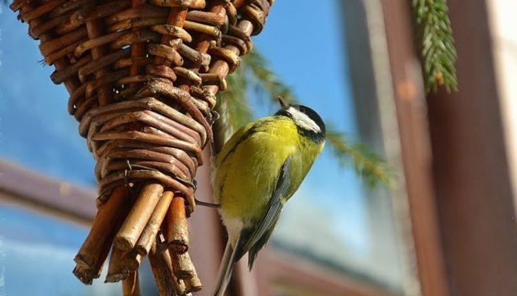 Ptaki zimowych ogrodów