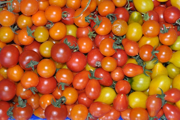 a03137c139 Pomidory koktajlowe - najciekawsze odmiany