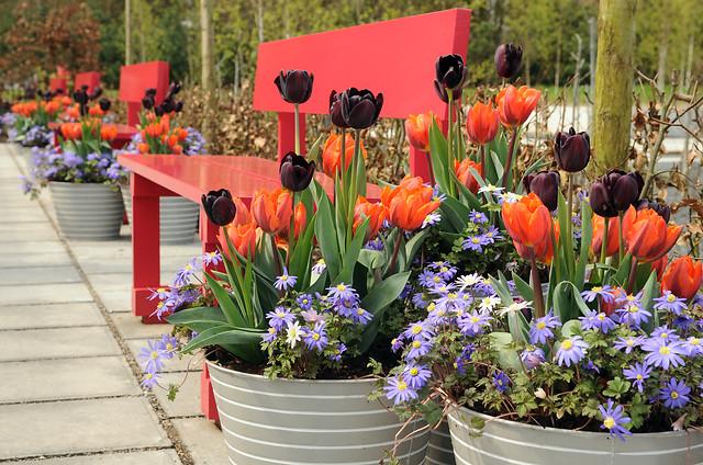 Co zrobić aby wiosenne donice kwitły jak najdłużej?