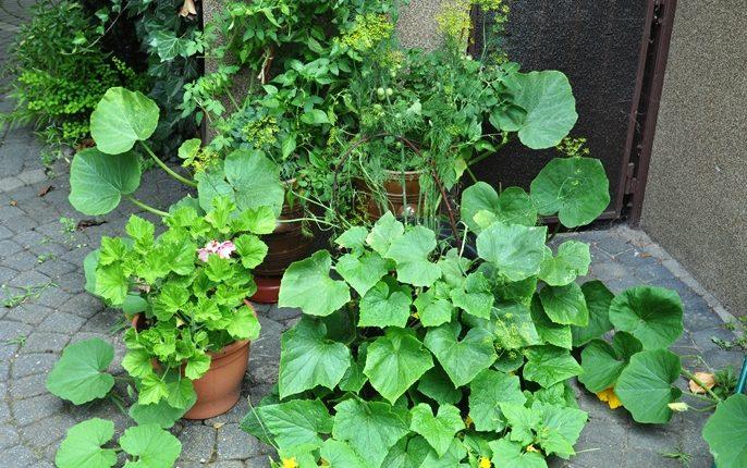 Warzywno-ziołowy ogródek w donicy