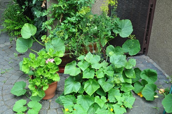Warzywno Ziołowy Ogródek W Donicy Naogrodowejpl