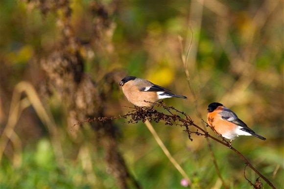 Dlaczego dokarmiamy ptaki?