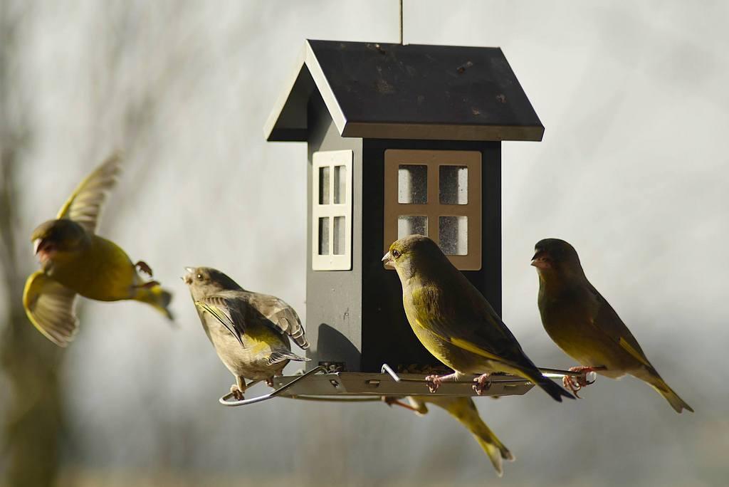 Czym zimą karmić ptaki w ogrodzie?
