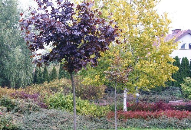 Drzewa do małych ogrodów