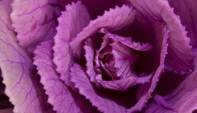 3 ornamental-cabbage-201490_960_720