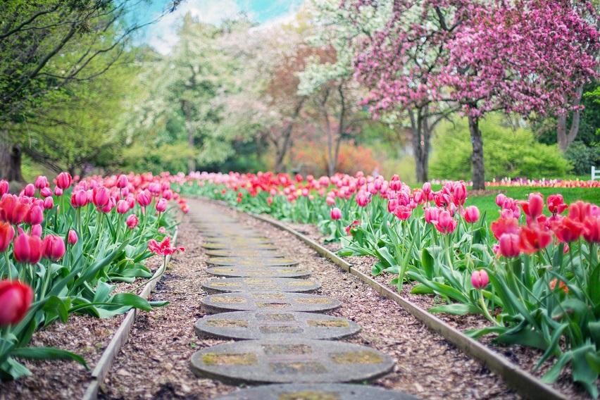 Piękny Ogród Może Być Twój Naogrodowejpl