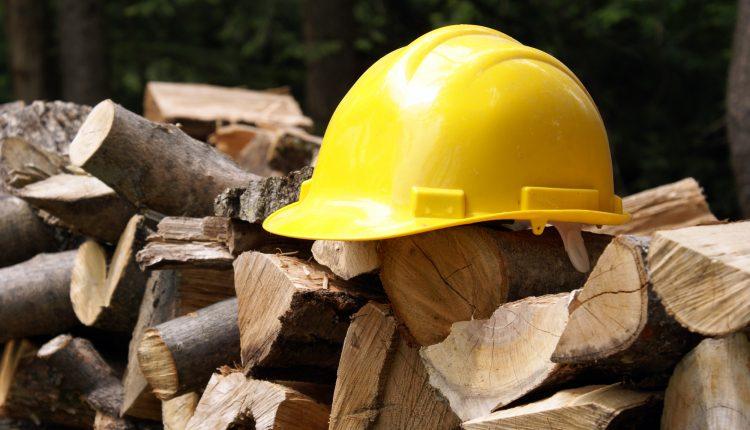Przycinanie, cięcie i ścinanie drzew – kompendium wiedzy