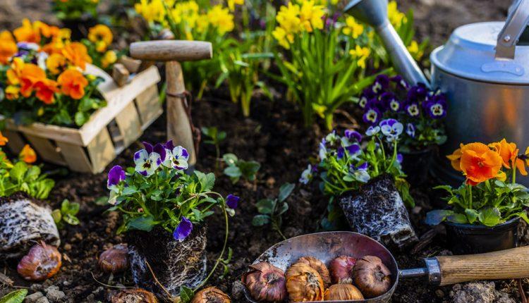 Jak urządzić funkcjonalny ogródek działkowy?