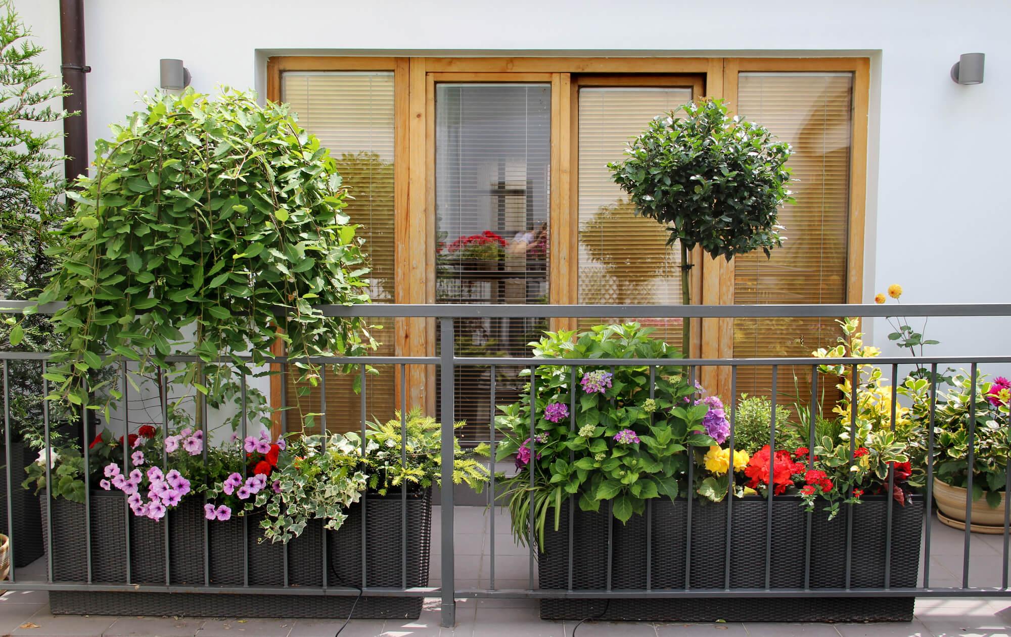 Najpiekniejsze Kwiaty Na Balkon Naogrodowej Pl