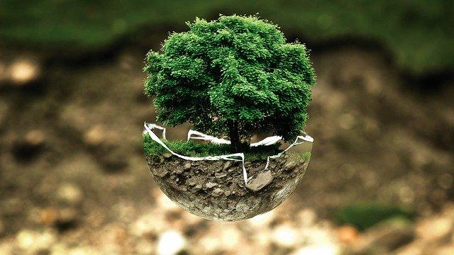 Ekologia – najważniejsze informacje!