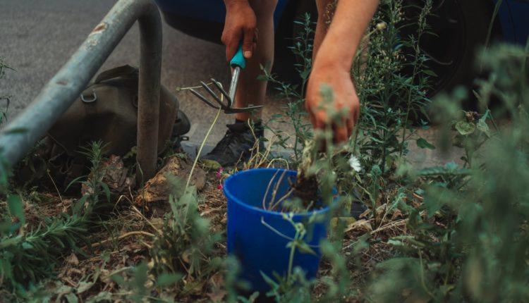 Które narzędzia pomogą nam w sprzątaniu ogrodu