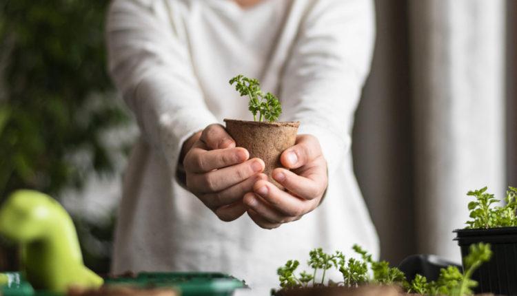 Domowa uprawa roślin w growboxach – o czym warto pamiętać? Doradzamy!